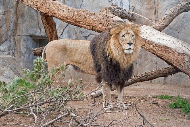 San Diego Zoo and Safari Park Combo Tour Ticket