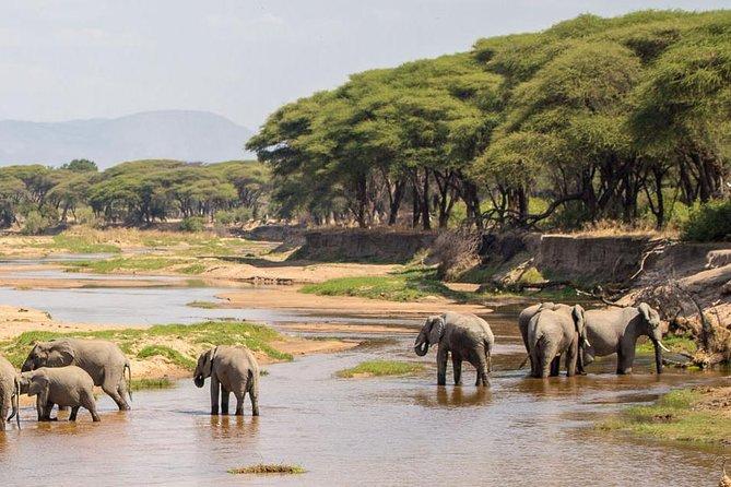 5-Day Ruaha Tanzania Wildlife Safari
