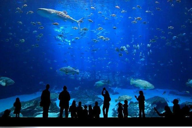 Skip the Line: Aquarium, Snow World/Ice Museum, WildPark, Oceanride XD Package