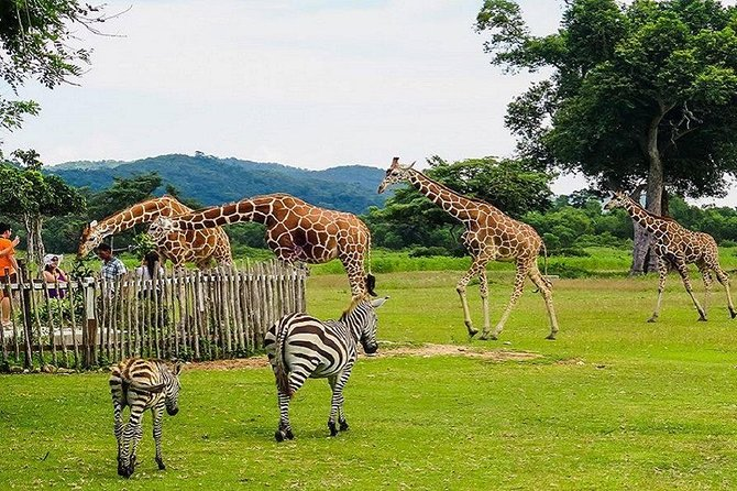 Coron Busuanga Calauit Safari Tour With Black Island (Private)