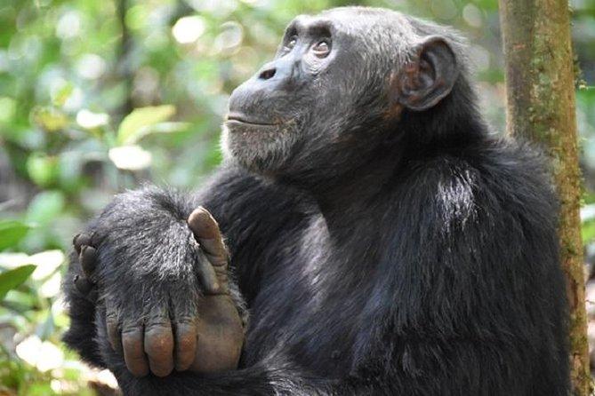 7 Days Exclusive Gorilla Experience in Uganda