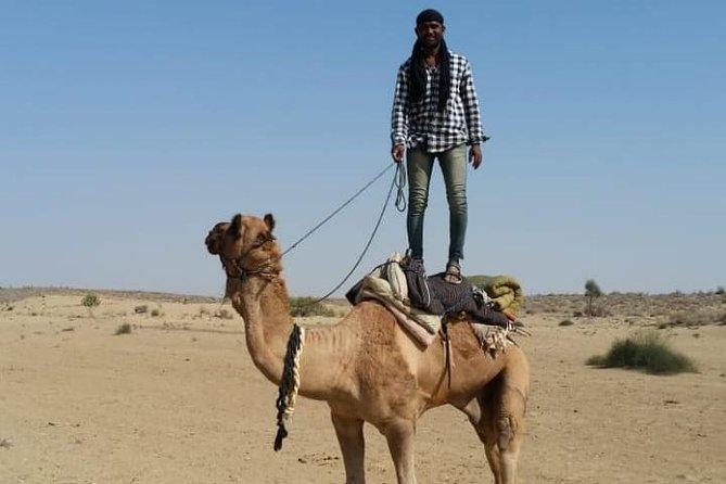 Raj camel safari in Jaisalmer