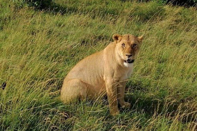 3 Days Masai Mara Safari Group Joining (daily Departures)