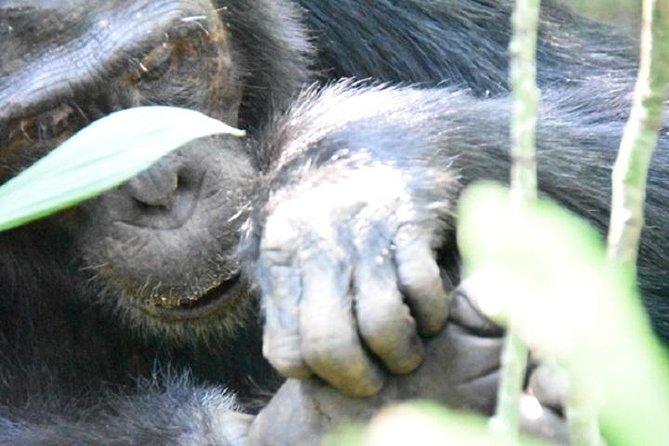 10 Days Classic Uganda Safari