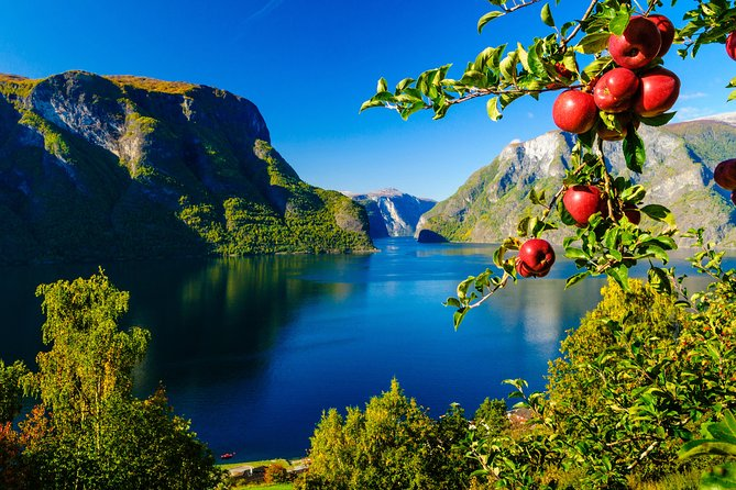 Private day tour Bergen To Oslo - incl Premium Fjord Cruise and Flåm Railway