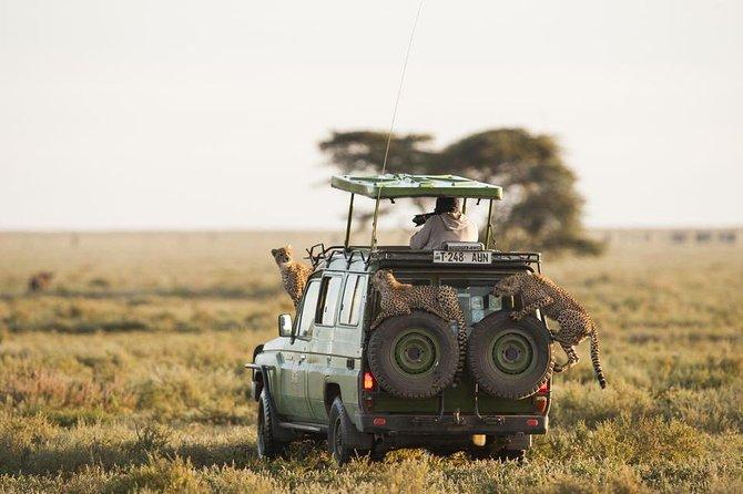 7 Days - Safari Simba from Mwanza