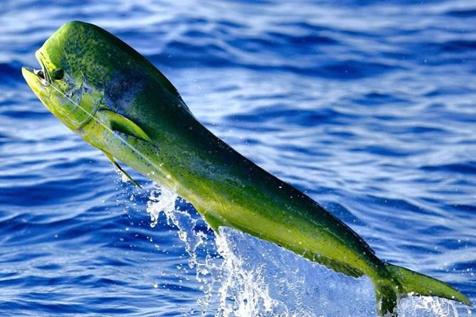 Miami Deep Sea Fishing Charters