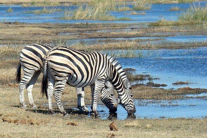 2 Days Lodge Safari