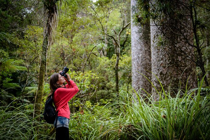 Waipoua Forest: Giants and Glow Worms Full Day Tour