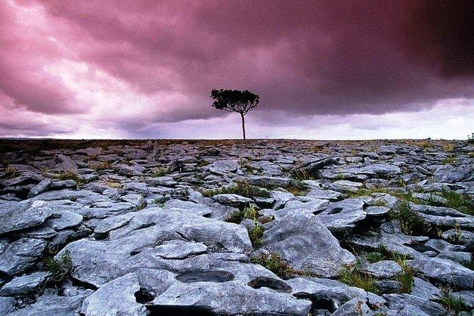 Walking in the unique Burren landscape & perfumery visit. Clare. Guided 4 hrs