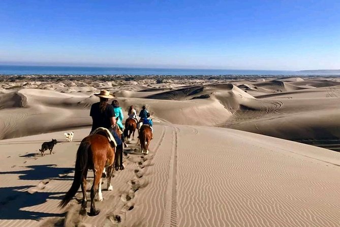 Pacific Horseback Ride on Beach and Sand Dunes with Viña del Mar City Tour