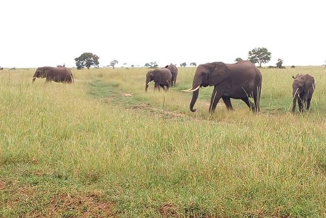 2 Day Safari To Mikumi National Park + transfers from Dar Es Salam