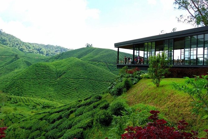 Cameron Highlands Nature & Batu caves Tour