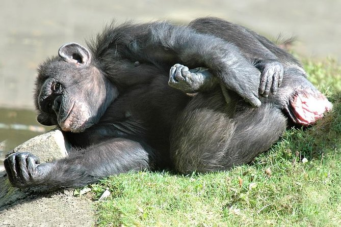 5 days/4 nights - Chimp tracking and cultural tour in Kibale.