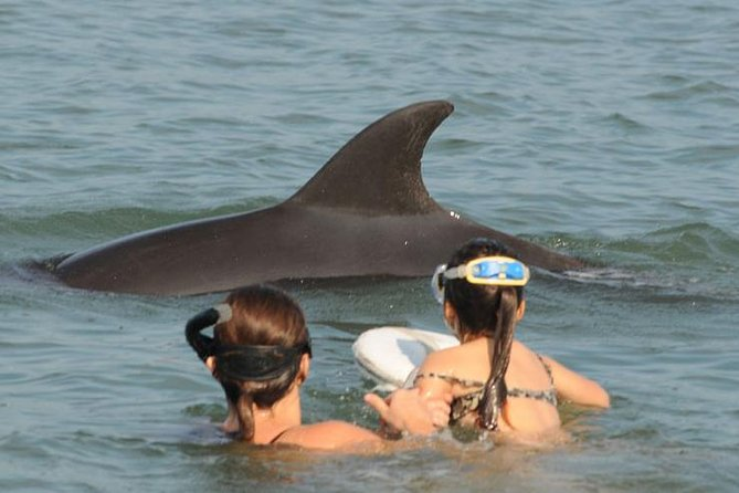 Swimming with Free Wild Dolphins in Puerto Vallarta