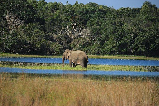 Highlights of Sri Lanka in 11 days