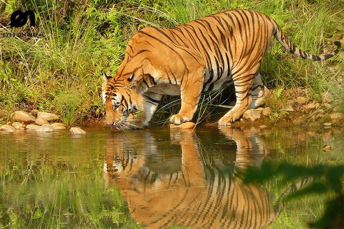 Kathmandu Pokhara Chitwan Tour ( discover Nature,culture & wildlife)
