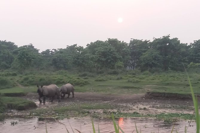 Luxury Chitwan Jungle Safari - 3 Days