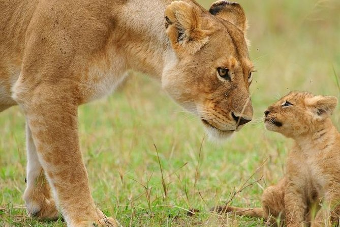 5 Days Tarangire, Serengeti, Ngorongoro & Manyara Budget Lodge Safari Tour