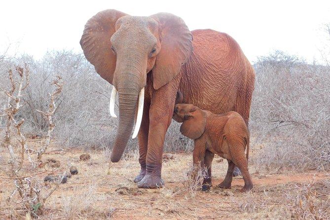 6 Days Kenya allround safari
