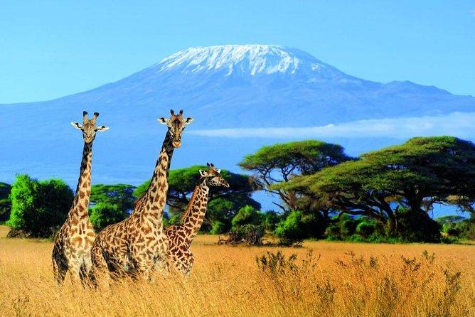 Kilimanjaro Special
