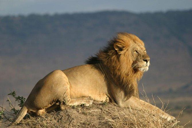 The Lion King: Best Of Kenya Safari (Culture, Wildlife & National Parks) 7-Days