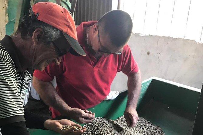 Ticoffia Coffee Tour-Sustainable Farming