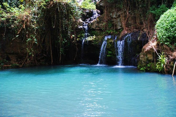 Ngare Ndare Forest Reserve Day Trip From Nairobi Or Nanyuki