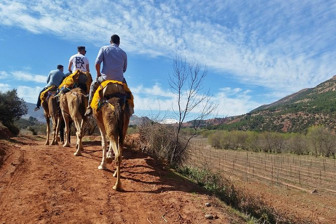 Atlas Mountains Day trips & 3 valleys with Camel ride
