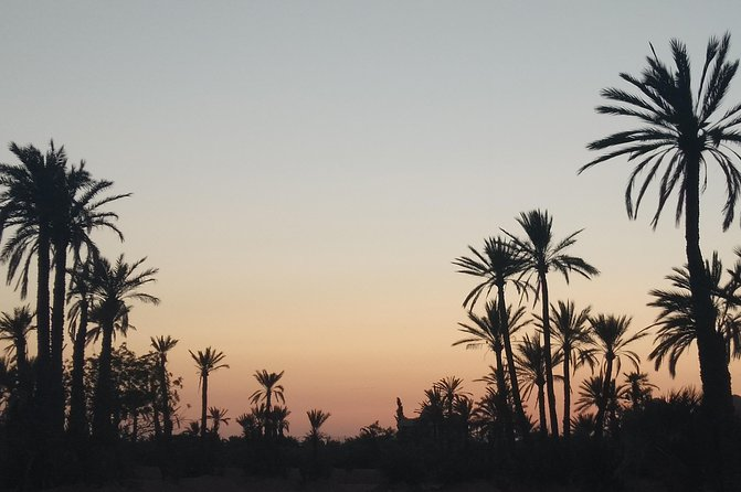 Camel ride at sunset in the palm grove of Marrakech