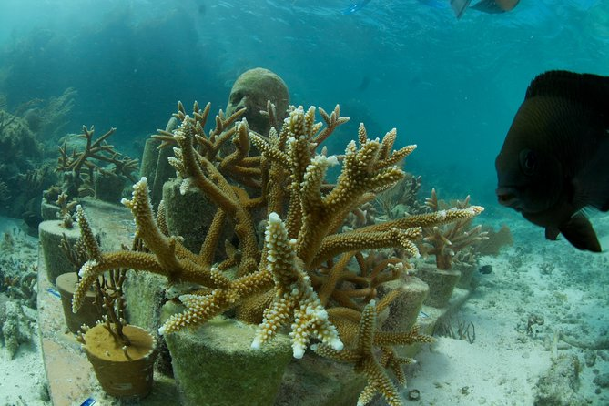 UNDER WATER MUSEUM CANCUN Snorkel in Punta Nizuc - Experience with Ticket