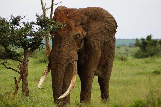 Kruger Park 2-day Safari from Maputo