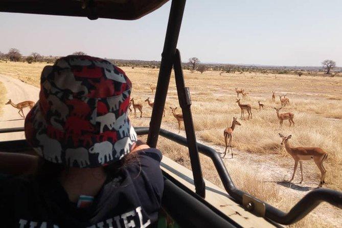 3 Days Ruaha National Park Safari Tour