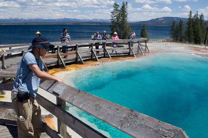 Yellowstone Wildlife Safari Private Tour