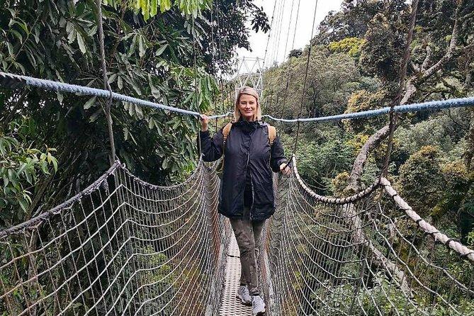 Nyungwe Chimpanzee Trekking Adventure