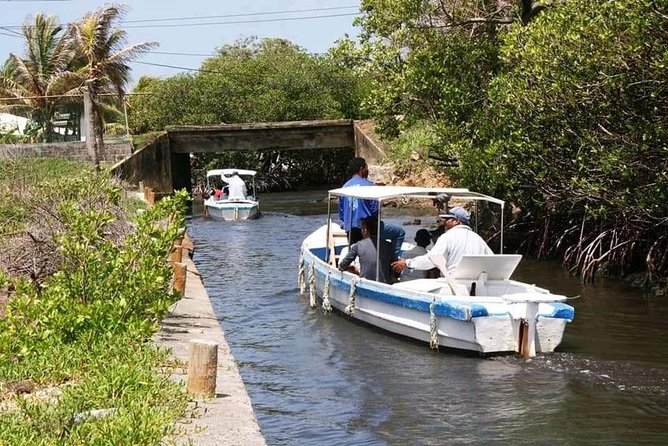 Garifuna and Mangrove Tunnel Adventure from Roatan