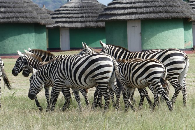 Safari in Pian Upe Game Reserve