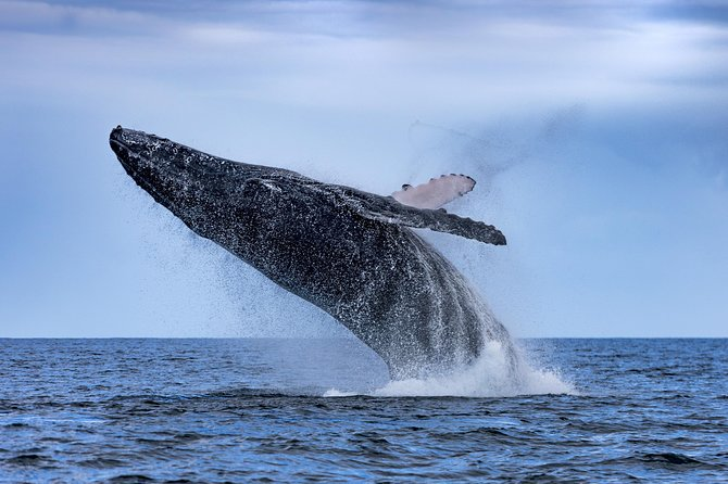 Adventure Whale Watching Tour Mooloolaba