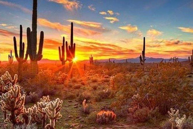 Secrets of the Wild Saguaro Desert Scavenger Hunt