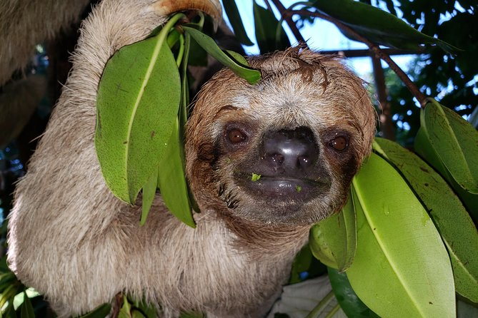 Roatan Shore Excursion: Monkeys & Sloths Park Encounter