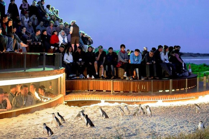 1 Day Exclusively Private Tour Of Phillip Island & The Penguin Parade