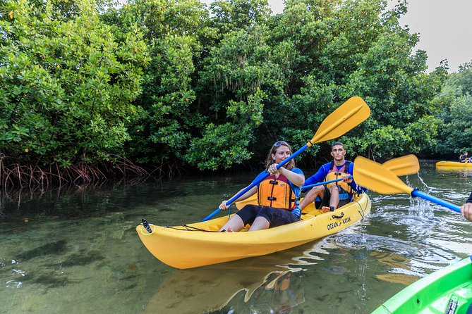 Rainforest Nature Walk & Bio Bay Night Kayaking Combo with Transportation