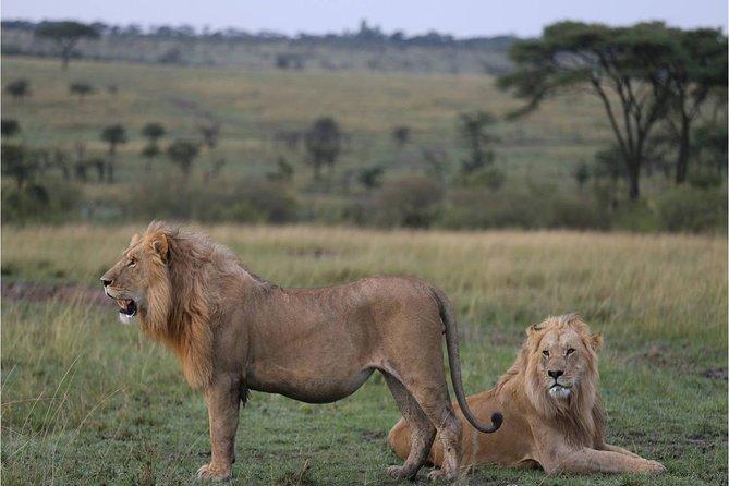 3 Days Masai Mara Budget Joining Safari