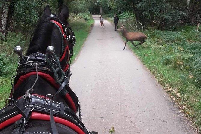 Killarney National Park Tour