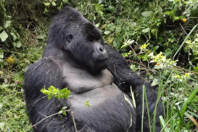 1 Day Gorilla Trekking Bwindi/Mgahinga Gorilla National Park & Lake Bunyonyi