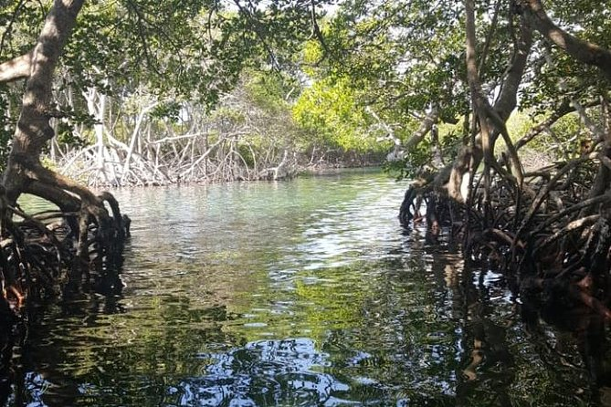 Mangrove tunnel and Garifuna culture tour