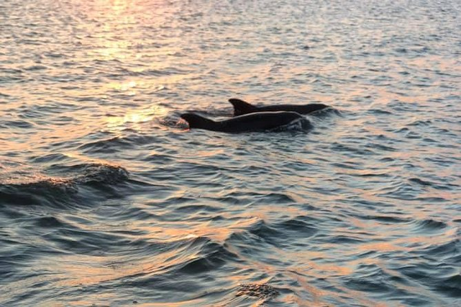 2-Hour Private Hilton Head Dolphin Watching Cruise