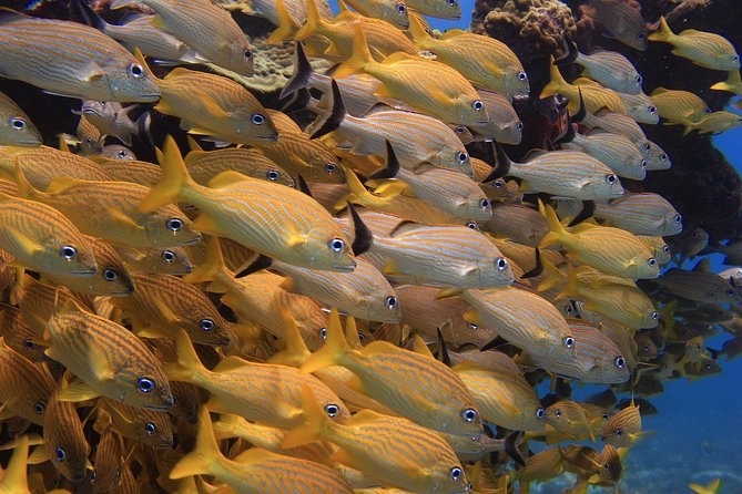Experience Snorkeling The Under Water Museum and the Manchones Reef