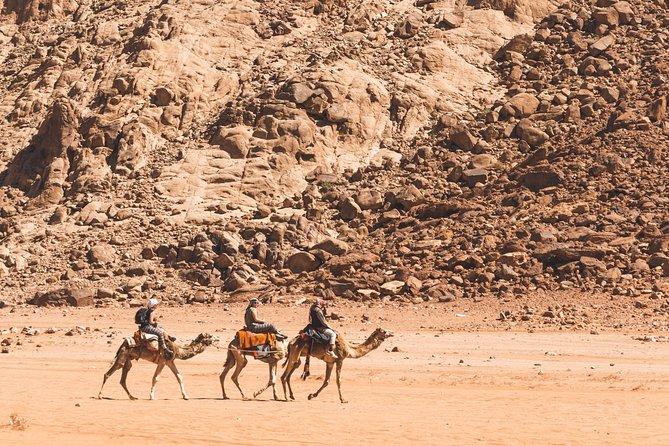 Camel Tours | Wadi Rum Desert