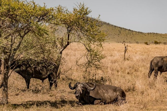 7 Days 6 Night In Southern Of Tanzania